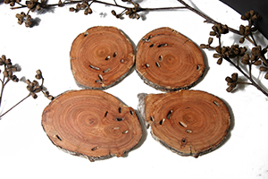 Snow Gum coasters set of 4