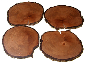 pear tree timber coasters